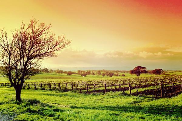 Nos séjours oenotouristiques dans les vignobles d'Alsace sont désormais disponibles.