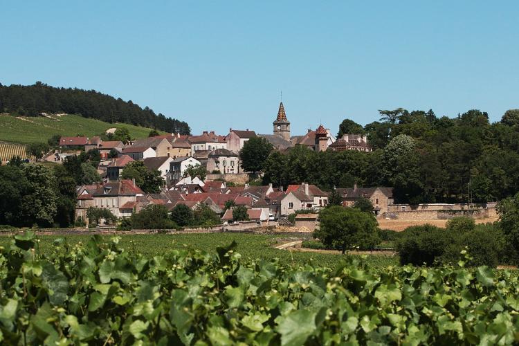 Visites et dégustations en Bourgogne - Domaine